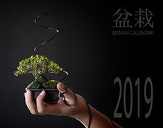 Photographs for a Calendar for Bonsai Addicts, a club for bonsai enthusiasts in Gauteng, South Africa. Pro bono work, with the proceeds of the calendar sales going to the club.