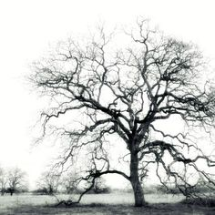 Black and White Winter tree, photography, tree branches, Oak Tree, Silhouette,  Winter landscape, photograph. $30.00, via Etsy.
