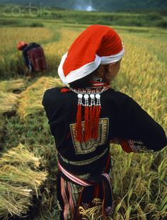 Vietnam | Women working in the fields.  Lao Cai Province | © Hugh Sitton/Corbis