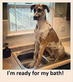 Funny dog picture - Im ready for my bath - jokideo.com/...