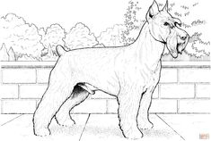 Schnauzer Terrier coloring page from Dogs category. Select from 31927 printable crafts of cartoons, nature, animals, Bible and many more. Farm Animal Coloring Pages, Dog Coloring Page, Colouring Pages, Printable Coloring Pages, Coloring Books, Coloring Stuff, Coloring Sheets, Coloring Pages For Grown Ups, Coloring Pages For Kids