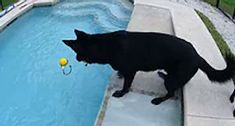 RIPS DOG TRAINING LLC Conway South Carolina, Rip Dog, German Shepherd Breeders, Happy Dogs, All Dogs, Dog Training, Dog Breeds, Trainers, Animals