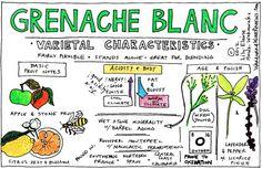 Grenache Blanc Variety Characteristics