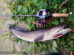 Fish-Snakehead Murrel Lure-DUO Realis V-Tail Shad 3""