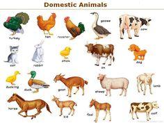 Her ses de mest almindelige domesticerede dyreracer.