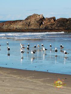 foto-de-navegantes-praia-itapema-sc