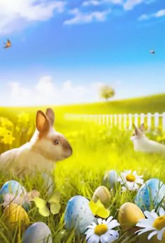 Spring Bunny Easter Eggs Backdrop for Photo Shoot – Dbackdrop Easter Backdrops, Muslin Backdrops, Custom Backdrops, Easter Bunny Pictures, Green Grass Background, Photography Backdrops, Photography Ideas, Coloring Easter Eggs, Easter Colors