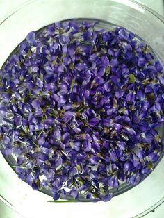 Fialkový sirup | ... Jedová chýše Lady Roveny .... Sprinkles, Cabbage, Amethyst, Texture, Vegetables, Crystals, Lady, Crafts, Food