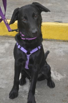 Ki (now Camden) was adopted!