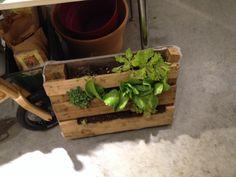 Home Made vegetables garden