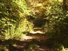 Morning sunlight on a beautiful trail run.