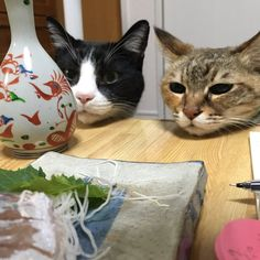 Funny Cute Cats, Silly Cats, Cute Cats And Kittens, I Love Cats, Catch The Cat, Japanese Animals, Cat Shedding, Old Cats, Cat Behavior