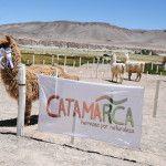 Comienza la actividad en Antofagasta de la Sierra por la Feria de la Puna