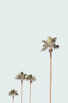 Ideas palm tree aesthetic vintage for 2019 Collage Mural, Bedroom Wall Collage, Photo Wall Collage, Collages, Aesthetic Pastel Wallpaper, Aesthetic Backgrounds, Aesthetic Wallpapers, Shabby Chic Wallpaper, Aesthetic Collage