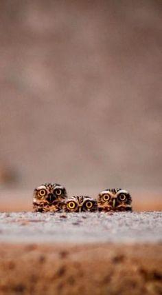 Funny Owls 27