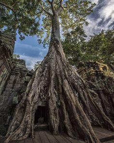 Siem Reap City Guide - All About Siem Reap & Angkor Wat, Cambodia Great Places, Places To See, Ta Prohm, Angkor Wat Cambodia, Siem Reap, Taxi Driver, Study Abroad, Travel Pictures, Just Go
