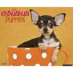 Just Chihuahua Puppies Wall Calendar: If you thought adult Chihuahuas were cute and tiny, get a load of these little guys and gals! Twelve dazzling, full-color photos typify all that is great in these little dogs.  $13.99  http://calendars.com/Chihuahuas/Just-Chihuahua-Puppies-2013-Wall-Calendar/prod201300002979/?categoryId=cat10126=cat10126#