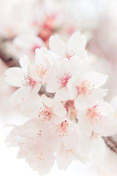 soft blossom pink ~ Ana Rosa