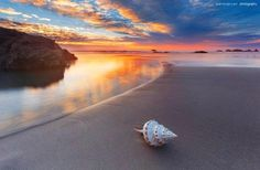 Shell by Aaron Pryor