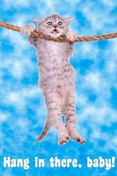 Hang in There Baby Cat Retro Motivational Cool Huge Large Giant Poster Art Cat Posters, Room Posters, Hang In There Cat, Dog Canvas Painting, Vintage Dog, Baby Cats, Cute Dogs, Wall Art Prints, Cute Animals