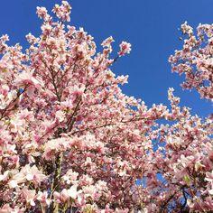 Flower Power  Blue Sky flowers sky spring love naturehellip