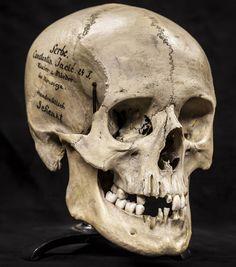 Resultado de imagen de skulls, human