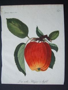 New Zealand art dealer and collector with over 35 years experience in antiquarian art and fine arts. Specialised knowledge in natural history, rural sports and Pacific exploration. New Zealand Art, Botanical Prints, Hand Coloring, Natural History, Apple, Fine Art, Antiques, Artist, Flowers