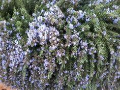 YperNoisis - YperNoisis Gaia, Bonsai, Plants, Indoor, Interior, Plant, Planets, String Garden