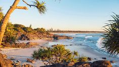 NSW's Cabarita Beach Has Been Named Australia's Best Beach for 2020 - Concrete Playground Australia Beach, Visit Australia, Australia Travel, Scuba Diving Australia, Fraser Island, Weekends Away, Travel And Leisure, State Parks, Adventure Travel