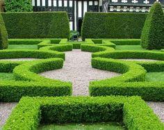 L'art topiaire se décline en version moderne avec les haies de clôture pour jardin !