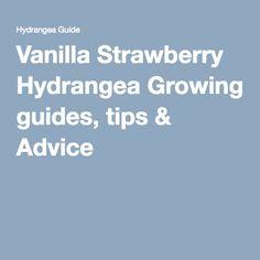 Vanilla Strawberry Hydrangea Growing guides, tips & Advice