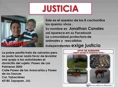 Sujeto quema 8 cachorros vivos en Zapopan, Jal. La mamá intenta salvarlos. http://www.proyectodiez.mx/2014/05/20/sujeto-quema-a-ocho-cachorros-en-la-via-publica-es-sancionado-por-zapopan/42267