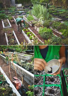 Growing you own vegetable garden, Spenser mag + jimmy williams