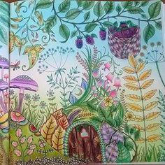 Enchantedforest Foretenchantee Coloringbook Livredecoloriage Jardinsecret Secretgarden Bayan Boyan Secretforestocean