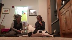 An important consideration when training our dogs, is to include their general care procedures into our fun, daily sessions. Deenie has a history of stressfu. Veterinary Care, Stethoscope, Moving Forward, Stress, Positivity, Training, Relationship, Free, Move Forward