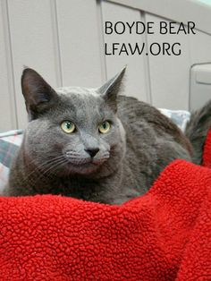 """Boyde Bear is new to the League, but has already been endorsed by one of our volunteers as """"The friendliest cat I've ever encountered!"""""""