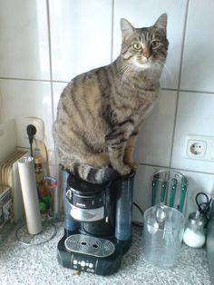 Bildergebnis für katze mit kaffee