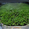 Kiskertünk védelme gyógynövényekkel - Kapanyél Marvel, Plants, Plant, Planets