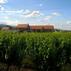 DiVines de Alsace es una agrupación que reúne a las más entusiastas promotoras de los vinos de esa región, así como su inigualable riqueza cultural