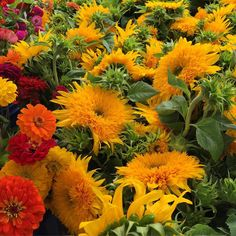 Sunflowers & Zinnias