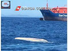Proseguono le ricerche di una imbarcazione con 14 migranti a bordo (VIDEO)