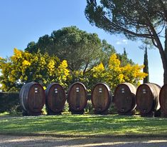 Winery in Chianti, Tuscany,