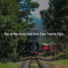 Journey back in time to the turn of the century and take a trip on The Elgin Railway to Elgin Railway Market. See link in bio for more info Stuff To Do, Things To Do, Take That, Let It Be, Back In Time, Cape Town, Journey, Train, Marketing