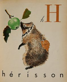 hedgehog sniffing an apple by illustrator Feodor Stepanovich Rojankovsky