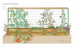 "This is one of the illustrations, by Pam Powell from my book ""Straw Bale Gardens"""