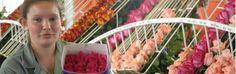 Colombia es el primer exportador de flores a Estados Unidos, y el segundo productor de flores a nivel mundial. En cuanto las rosas colombianas, conocidas en el mundo entero por su calidad y belleza, solo competimos con nuestros vecinos del Ecuador, ienes compartes con nosotrosimilares características geogreaficas y climáticapara producir las mejores rosas del mundo.