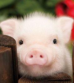 OING Cochon Animal heureux Drôle Cool Baby Shower Garçon Fille Body Ange 44
