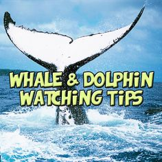#Howto Whale and Dolphin Watching! Read more #MarineLife #Humpback #MeetSouthAfrica #KZNSouthCoast