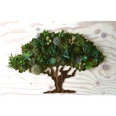 COLOR personalizado: Roble árbol suculento cactus Vertical