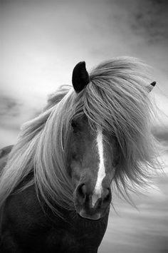 Horse photo black and white photography door MitchMcfarlanePhotos